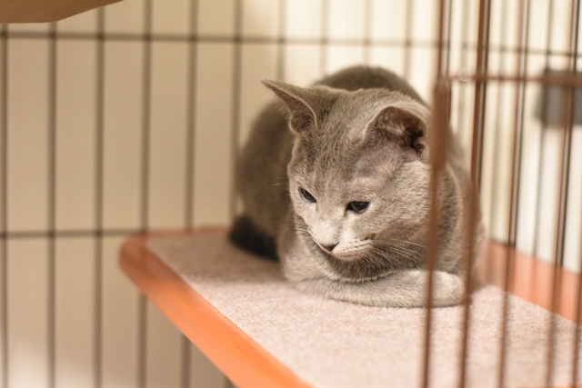 【動物取扱業】犬猫のゲージ・運動スペースの基準