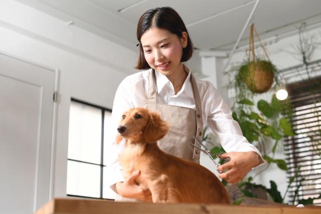経験無し会社員が動物取扱責任者になる方法